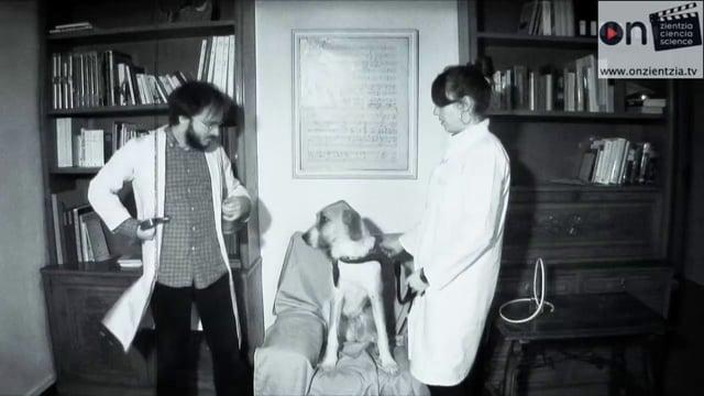 La  perra  de  Pavlov